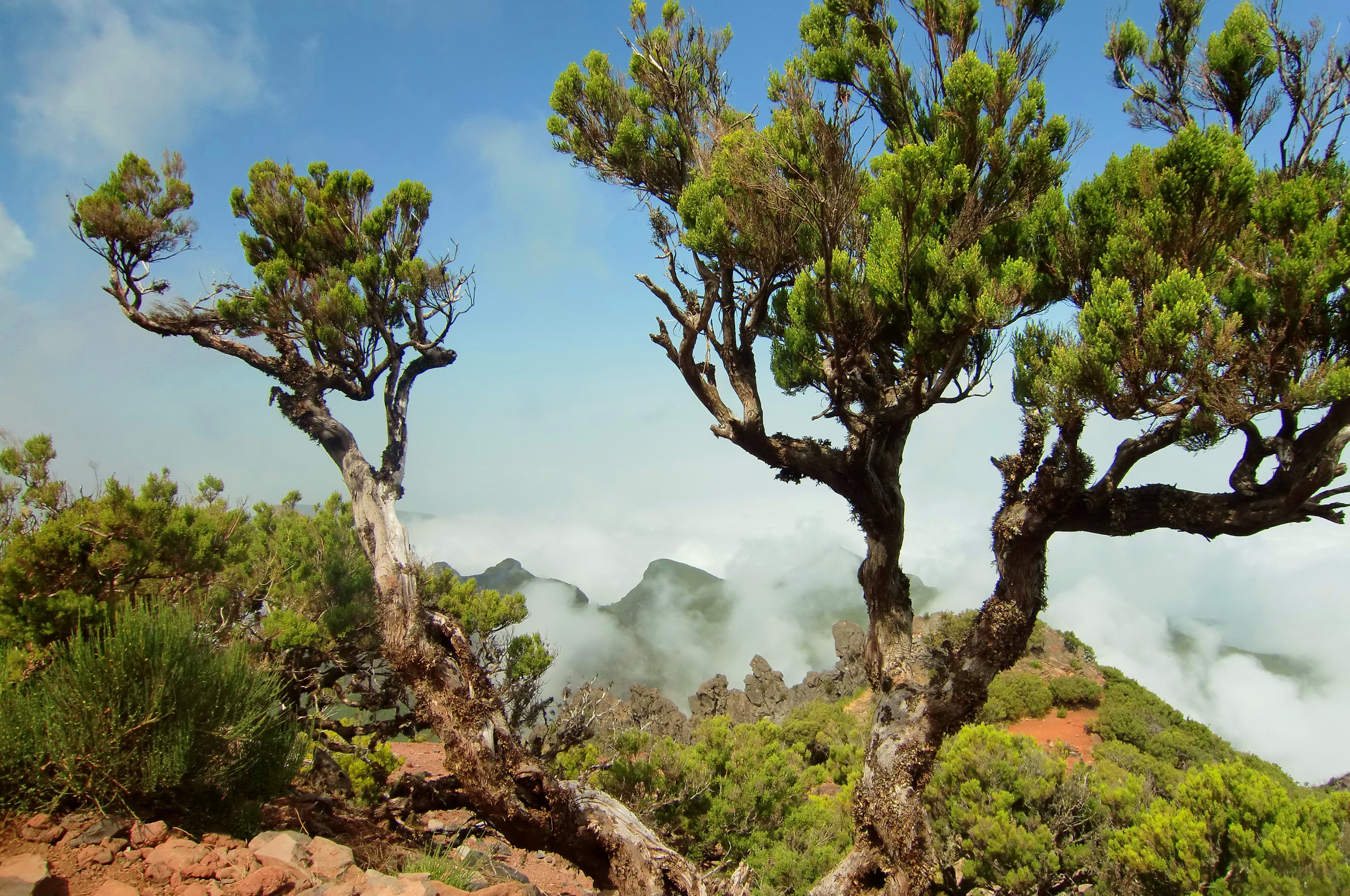 Madeira landscape